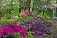 Flowers;Flower;Indiana;Spring;Spring-Flowers;Pink;Green;Woods;White;Red;Gibson-County