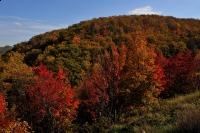 fall;color;red;autumn;horizontal